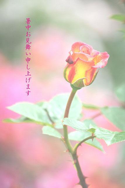 f0157215_7204017.jpg