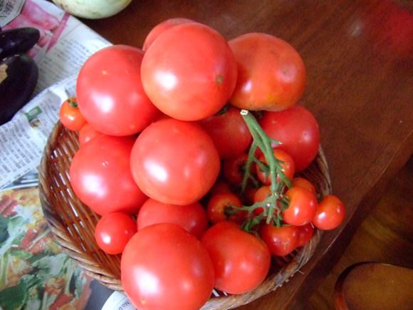 夏草に負けず....野菜が成長!_b0137932_15391674.jpg
