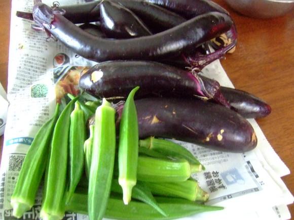 夏草に負けず....野菜が成長!_b0137932_15404737.jpg