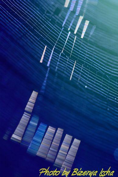 『蜘蛛の糸』_d0086248_63413100.jpg