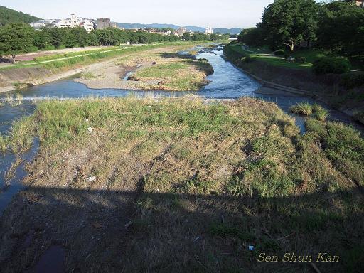 加茂川の花_a0164068_16175441.jpg