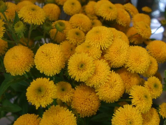 オークリーフ(涼を呼ぶ花たち)_f0049672_13521248.jpg