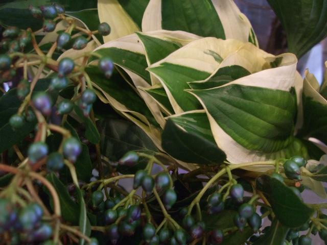 オークリーフ(涼を呼ぶ花たち)_f0049672_13525790.jpg