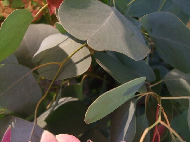 オークリーフ(涼を呼ぶ花たち)_f0049672_1353597.jpg