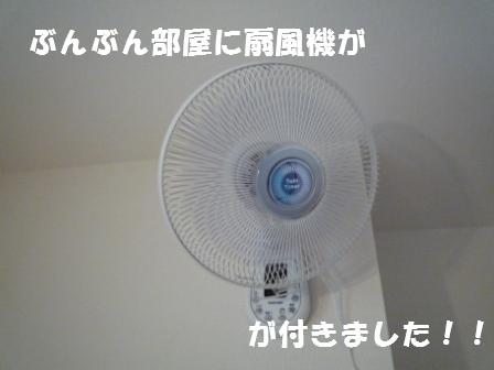 c0196992_1420882.jpg