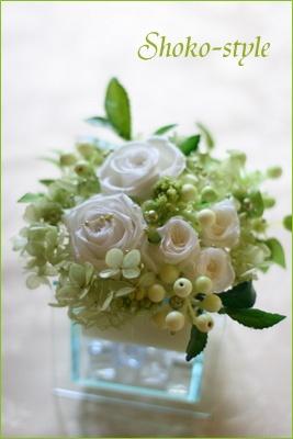 白いバラ_a0135999_0182390.jpg