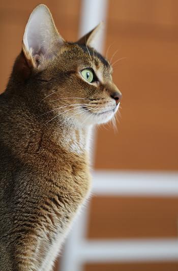 [猫的]2005年7月22日_e0090124_7465851.jpg