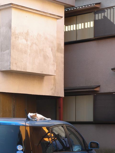 屋根の上のお昼寝ねこ_e0089232_21584566.jpg