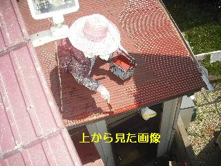 セメント瓦塗装工事_f0031037_2193089.jpg