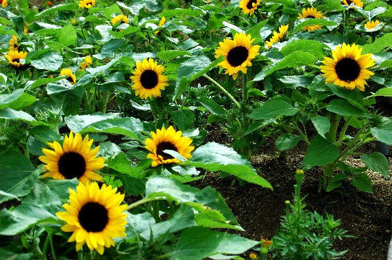 和歌山県植物公園緑花センター _b0093754_2345592.jpg