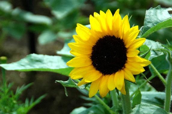 和歌山県植物公園緑花センター _b0093754_23463073.jpg