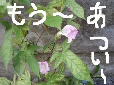a0117168_17334918.jpg