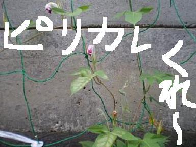a0117168_1734121.jpg