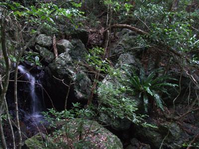 「嘉入の滝」の上へ_e0028387_1365658.jpg