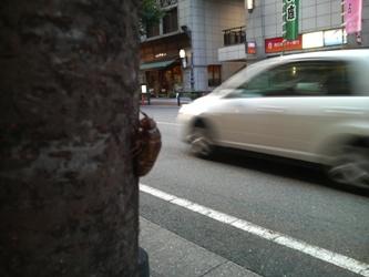 博多区の真ん中で羽化する前のセミを見ました。_e0188087_06558.jpg