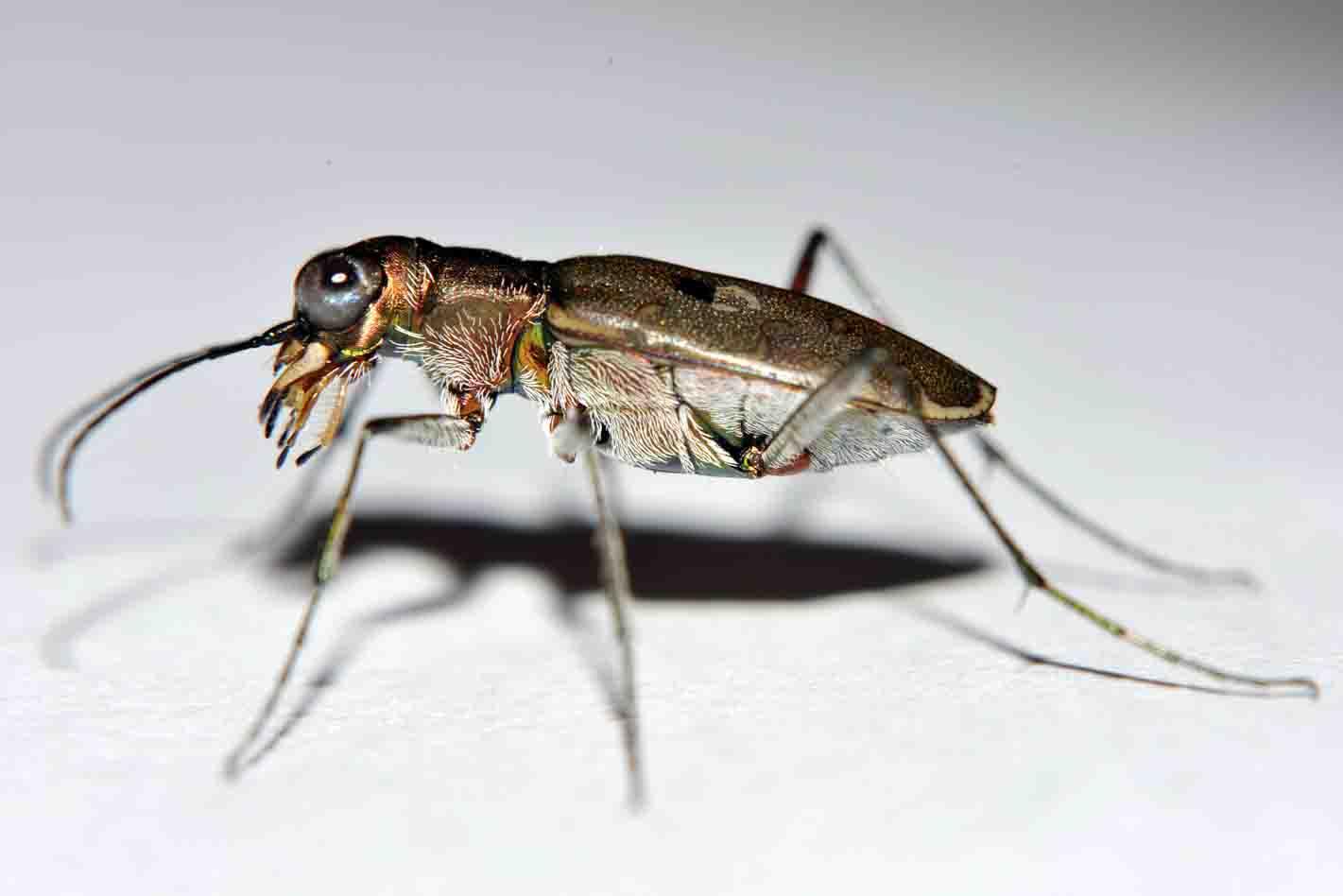また昆虫の脚_d0163696_1257145.jpg