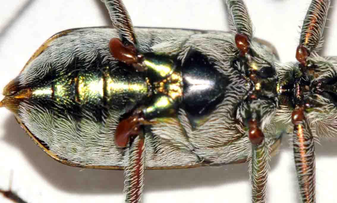 また昆虫の脚_d0163696_12572916.jpg