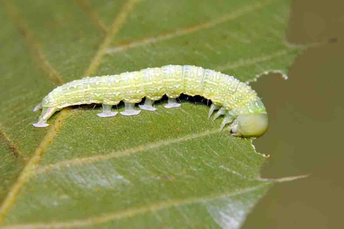 また昆虫の脚_d0163696_12584443.jpg
