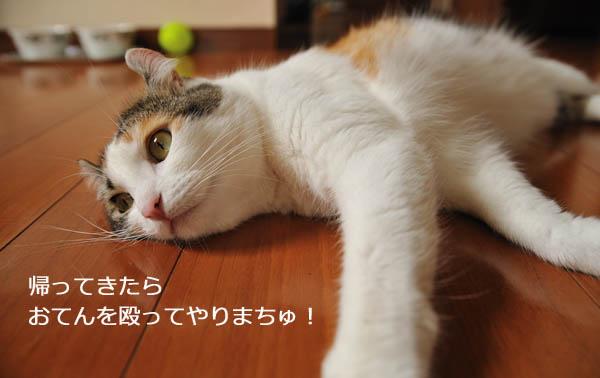 b0141397_1091585.jpg