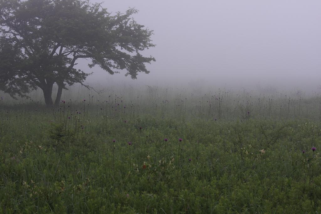 高原の朝_b0116600_2338414.jpg