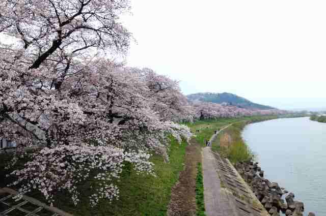 一目千本桜_a0148206_5211759.jpg
