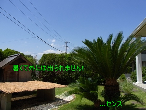 c0205806_1752676.jpg
