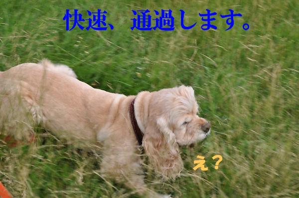 b0067012_2328368.jpg