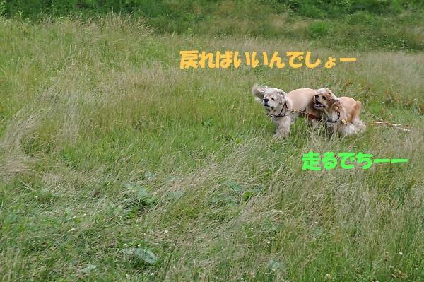b0067012_23311261.jpg