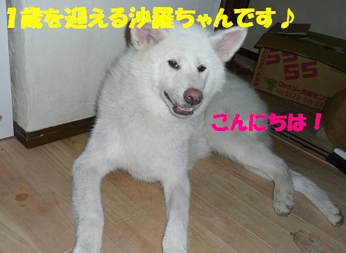 f0121712_15322241.jpg