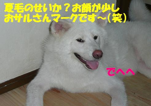 f0121712_15323075.jpg
