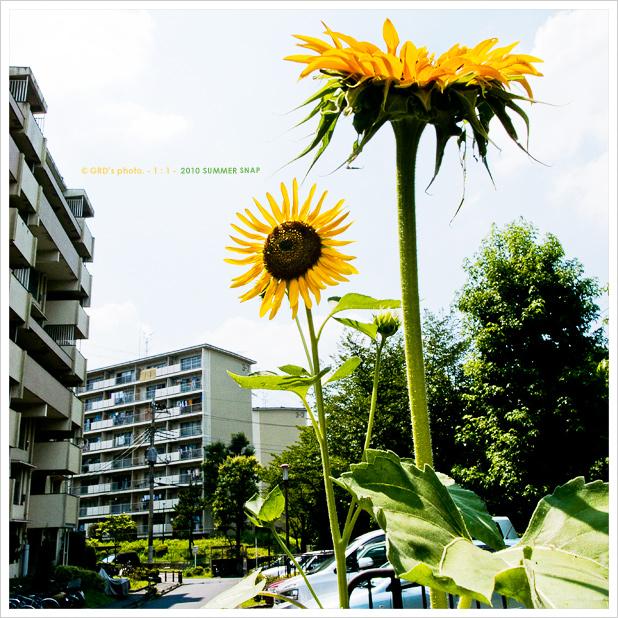 夏の花…_e0117517_1952852.jpg