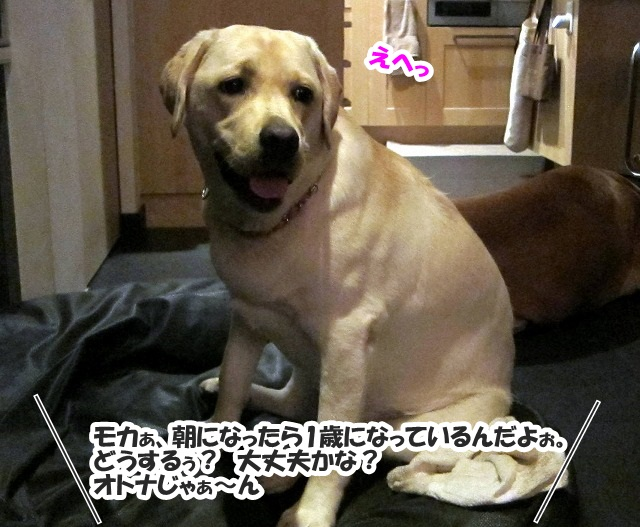 Happy Birthday 1_e0192217_7552828.jpg