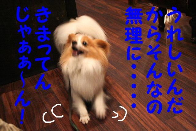 b0130018_1643258.jpg
