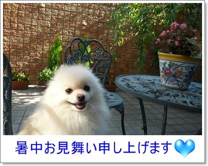b0167519_847712.jpg