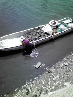 7月23日豊川河口域あさり種子採取2_e0196522_14242681.jpg