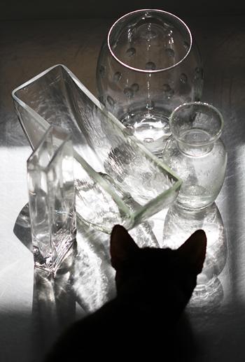 [猫的]屈折_e0090124_7461346.jpg