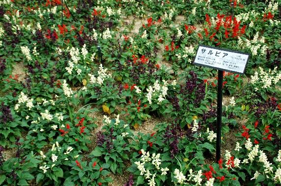 和歌山県植物公園緑花センター _b0093754_23311988.jpg