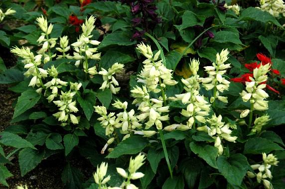 和歌山県植物公園緑花センター _b0093754_23314895.jpg