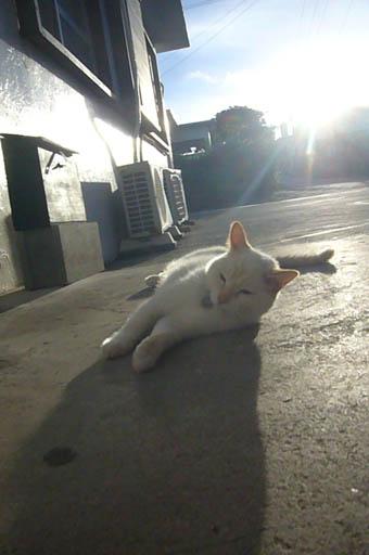 sun sun._c0153966_2231925.jpg