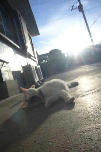 sun sun._c0153966_2233739.jpg