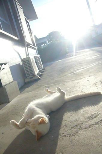 sun sun._c0153966_2242740.jpg