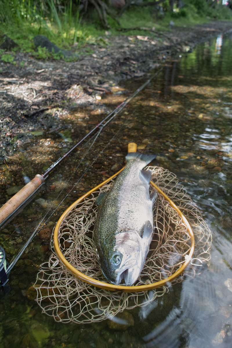 夏の湖を釣る_c0095801_18241916.jpg