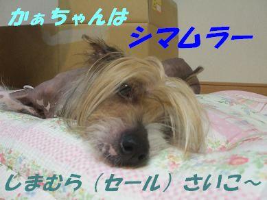 f0179203_782629.jpg