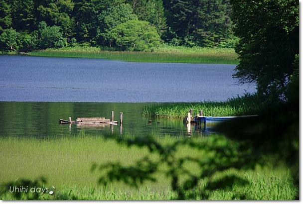夏の尾瀬へ・・・満開のニッコウキスゲ_f0179404_20561667.jpg