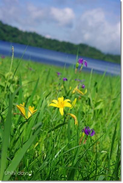 夏の尾瀬へ・・・満開のニッコウキスゲ_f0179404_20565429.jpg