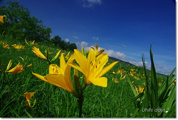 夏の尾瀬へ・・・満開のニッコウキスゲ_f0179404_20571375.jpg