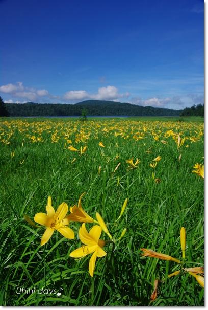 夏の尾瀬へ・・・満開のニッコウキスゲ_f0179404_20574179.jpg