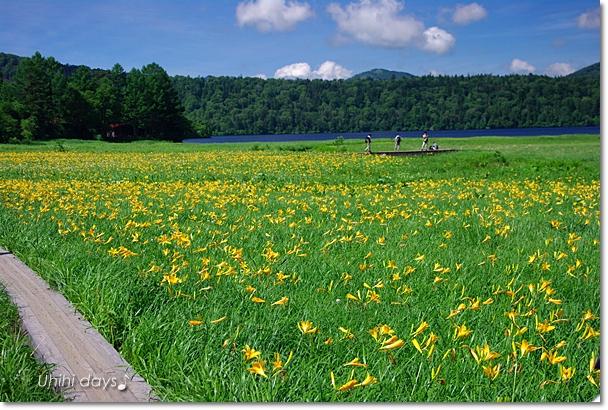 夏の尾瀬へ・・・満開のニッコウキスゲ_f0179404_20584795.jpg