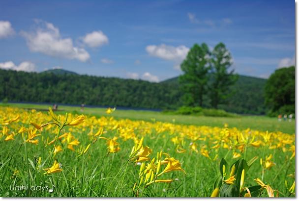 夏の尾瀬へ・・・満開のニッコウキスゲ_f0179404_20591690.jpg