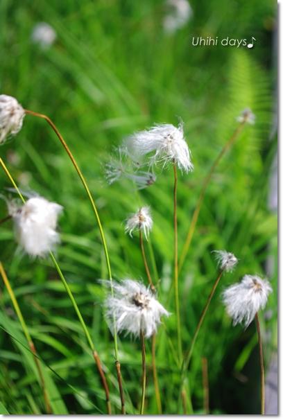 夏の尾瀬へ・・・満開のニッコウキスゲ_f0179404_210211.jpg